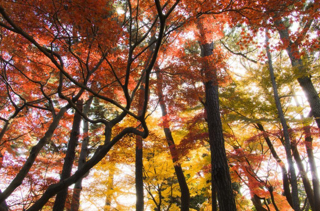 新宿御苑前駅_新宿御苑の秋の風景