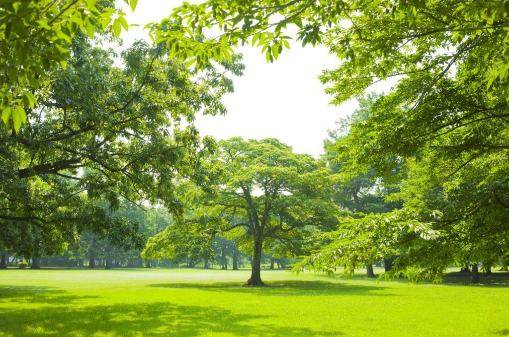 お金がなくても趣味にできる暇つぶし_公園でピクニック